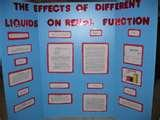 Photos of Amazing Science Fair Projects