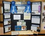 Photos of 1st Place Science Fair Projects