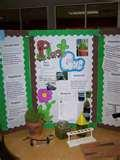Pictures of Quick Science Fair Projects