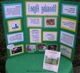 Science Fair Project Idea Photos