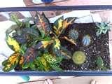 Pictures of Plant Science Projects