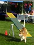 Pictures of Dog Science Fair Projects