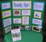 Pictures of 4th Grade Science Fair Project
