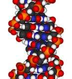 Dna Science Projects Pictures
