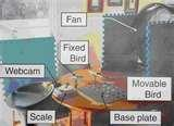 Physical Science Fair Project Ideas